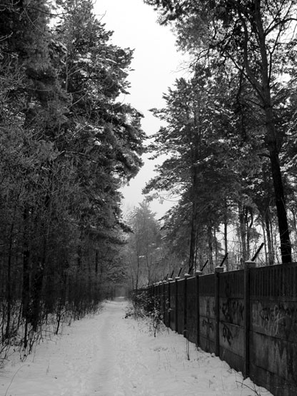 Starachowice, in the woods