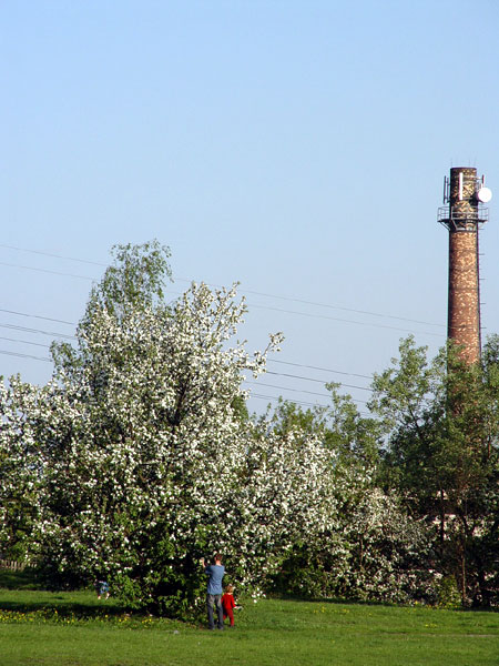 Chimney behind the park in Starachowice, Poland
