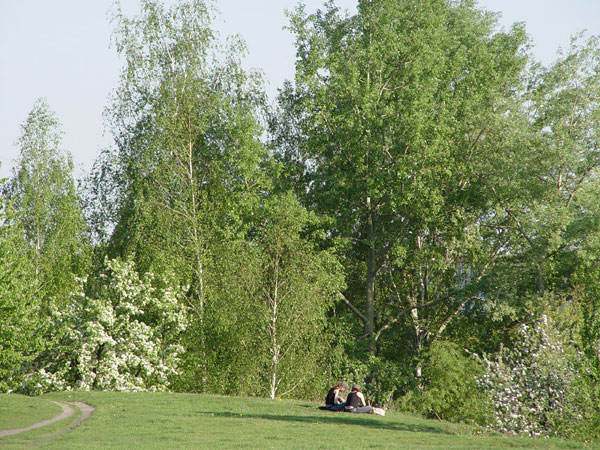 Picnic in the green, Starachowice, Poland, trees, people, teens, teen having a picnic